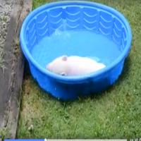 Nuttet gris mega glad for vand